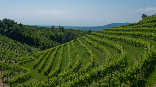 Vineyards near Vadobbiadene (Veneto)
