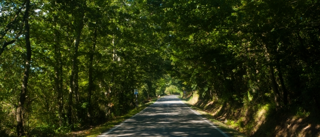 Grand Tour della Val di Merse - deserted road