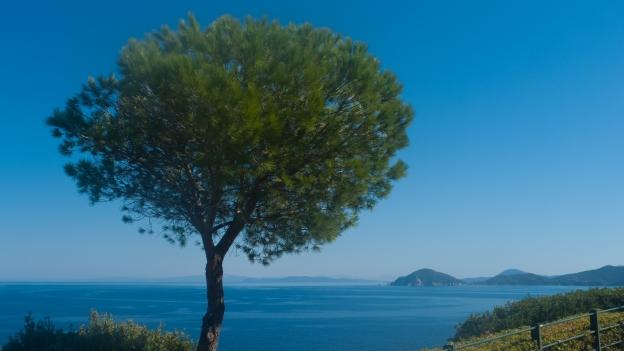 Elba - coastline near Marciana Marina
