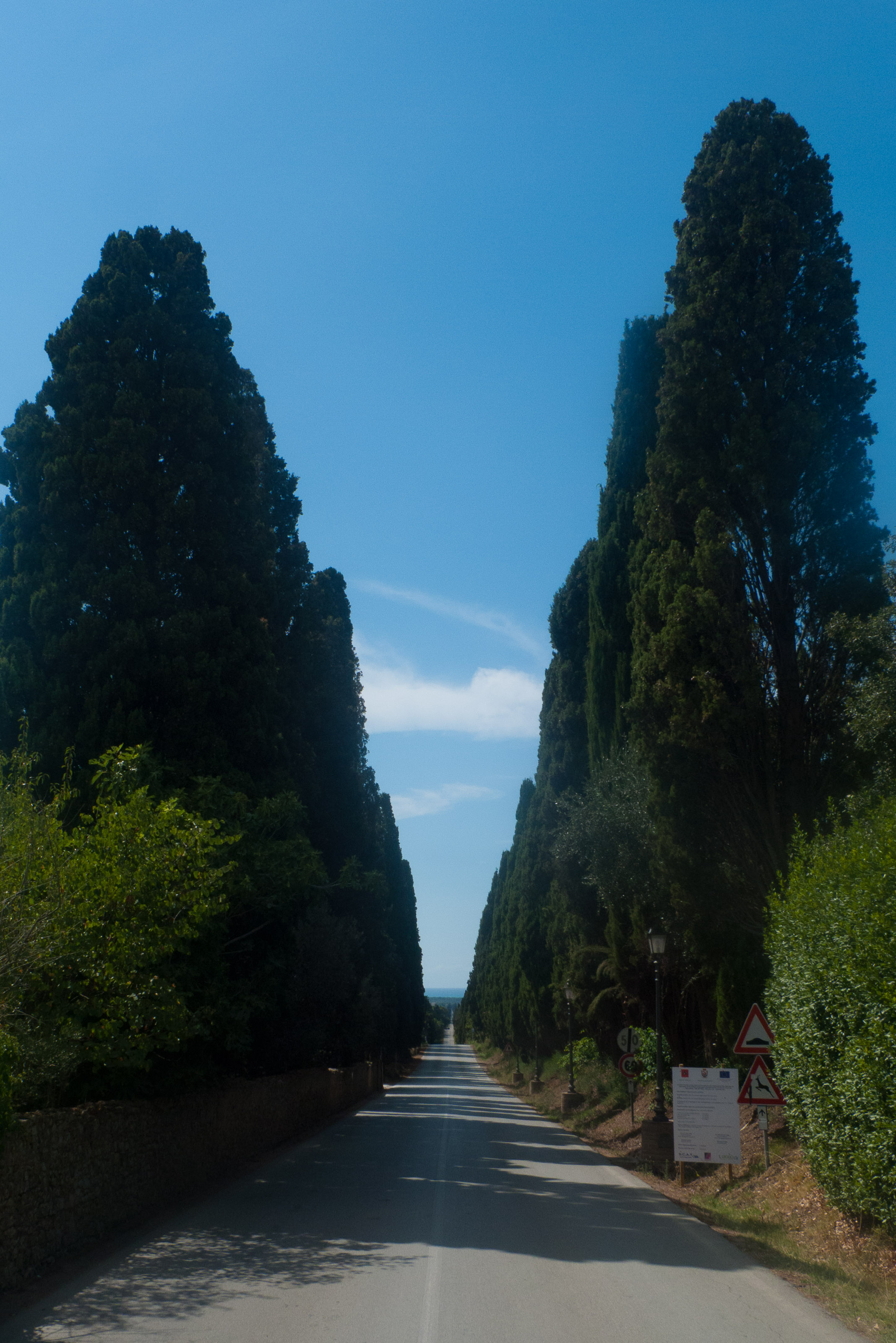 The avenue of cypress trees between Bolgheri and the sea