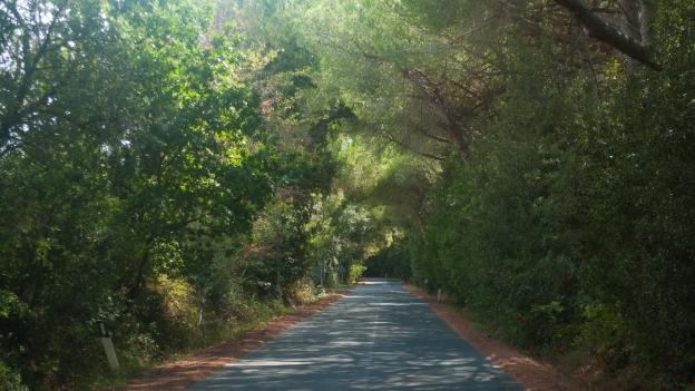 Road near Bolgheri