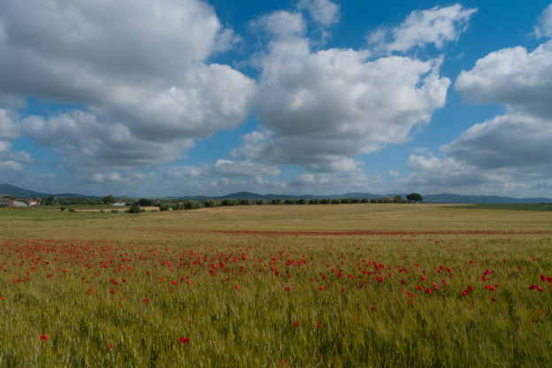 Wildflowers in the Lazio countryside