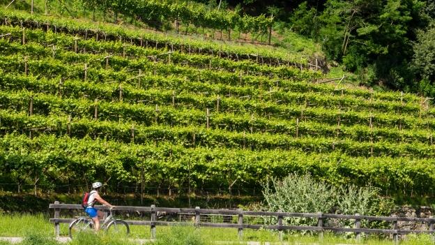 Cyclists riding the Vinschgau Radweg/Via Claudia near Partschins (Parcines)